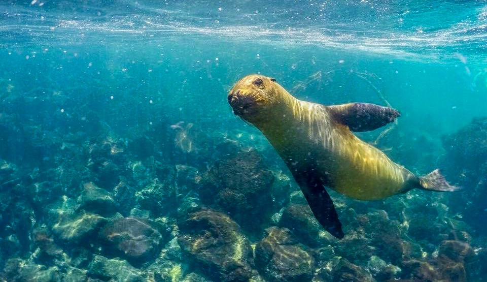Galapagos Islands, Go Travel and Talk